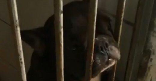 Fotos denunciam 'canil do terror' onde animais foram resgatados no RJ