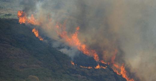 1,3 milhão de pessoas se unem em campanha pelo fim das queimadas
