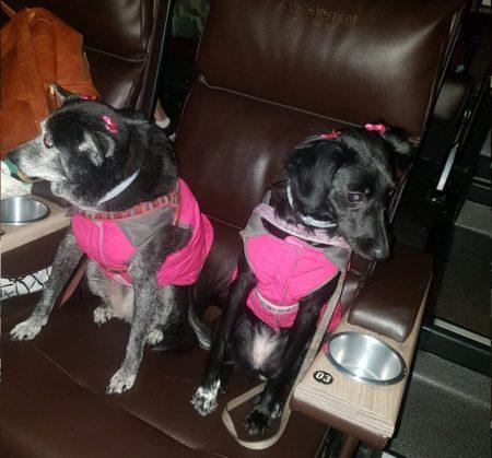 cinema para cachorro