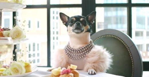 Site busca cãozinho para ser 'crítico' de hotéis; saiba mais