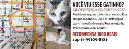 cartaz com informações e fotos de um gatinho branco com mancha cinza no rosto
