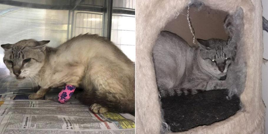 antes e depois do gatinho Guerreiro