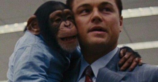 ONG pede a DiCaprio que salve chimpanzé de O lobo de Wall Street