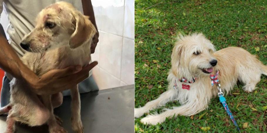 antes e depois da cadela Margarida