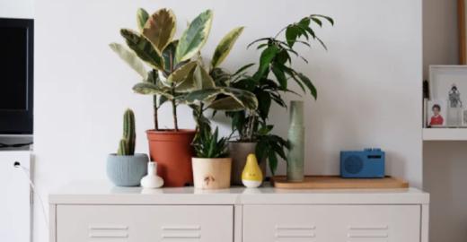 Conheça 9 plantas que precisam de rega apenas uma vez por mês