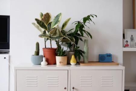 plantas em cima de um móvel