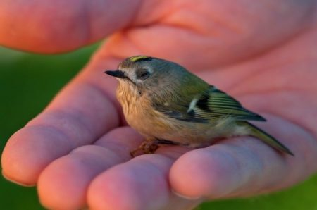 """pássaro durante as gravações do filme """"Them That Follow"""""""