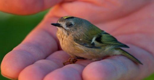Pássaro explorado morre durante gravações de filme