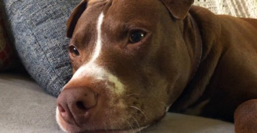 Policial atira e mata cachorro que latiu para defender tutor