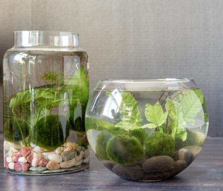 planta aquática em um vaso de vidro
