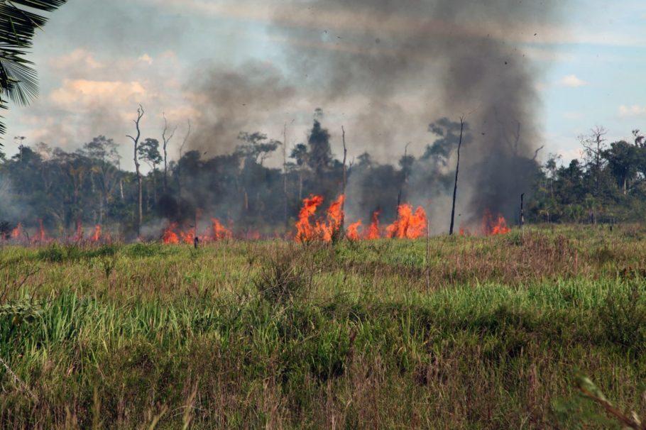 vegetação sendo queimada