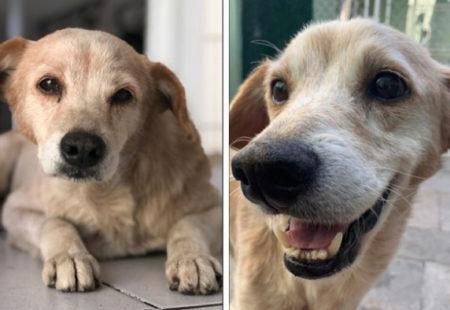 cão triste e, na segunda, foto feliz