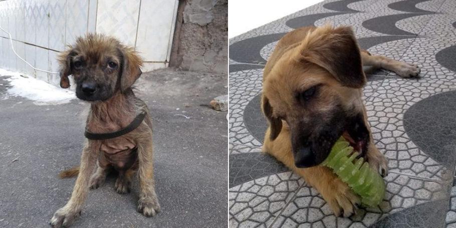 antes e depois do cão Sardinha
