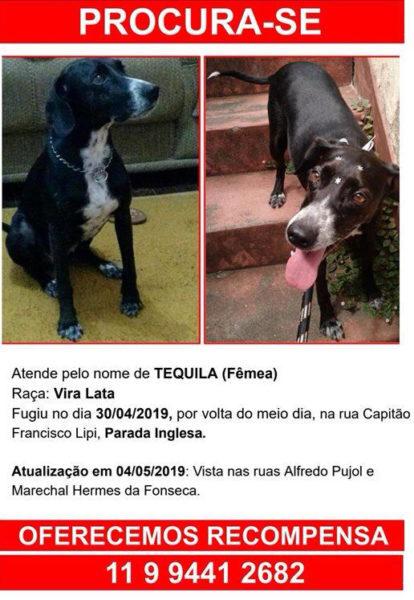 cartaz com informações e fotos da cachorra Tequila, que está perdida. Ela é preta com mancha branca no rosto e no peito.
