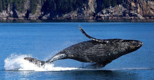 Hotel em Arraial d'Ajuda oferece observação de baleias