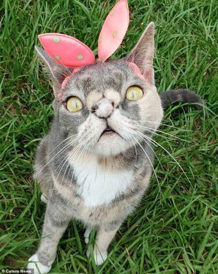 gata considerada feia