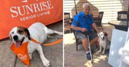 a cachorra foi adotada pelo lar para idosos