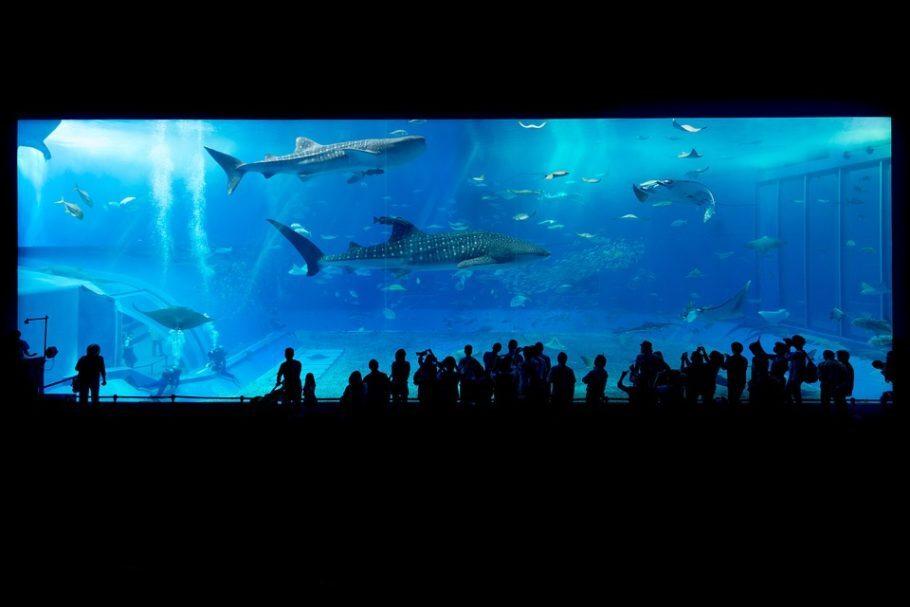 tubarões em aquário