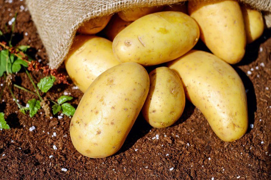 <b>Batata</b> - Ela é conhecida por ser rica em carboidrato, mas a proteína é o segundo nutriente mais abundante no tubérculo, com cerca de 2% de sua composição
