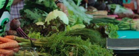 feira de alimentos orgânicos do festival experimenta
