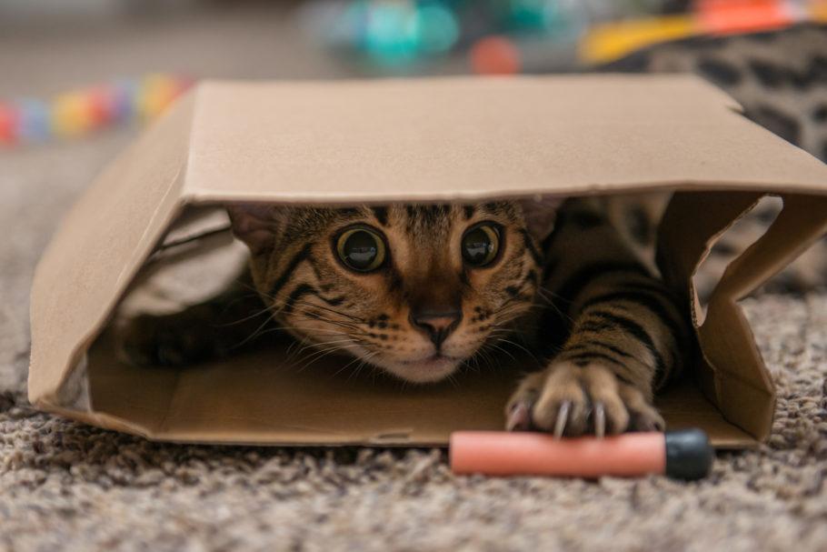 gatinho brincando dentro da caixa de paplelão