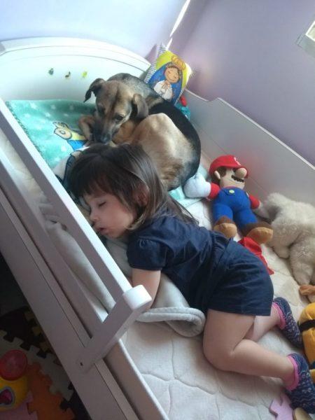 criança e cachorro dormindo juntos na cama