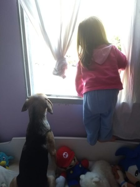 Criança e cachorro olhando na janela