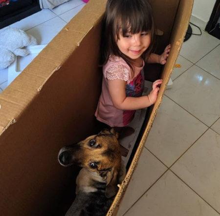 criança com o cachorro brincando dentro de caixa de papelão