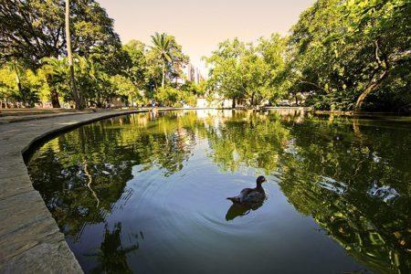 espelho d'água do parque 13 de maio no recife