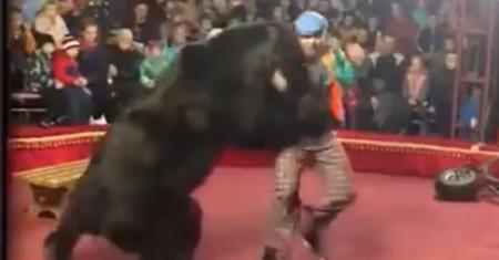 urso ataca treinador em circo na rússia