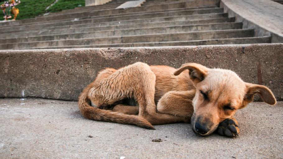 animal magro abandonado na rua
