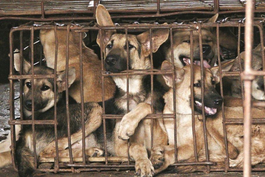 cachorros em jaula