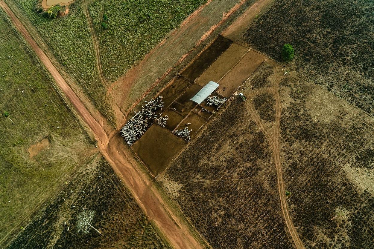 Amazônia perdeu 10 mil km² de floresta em 2019, maior taxa desde 2008