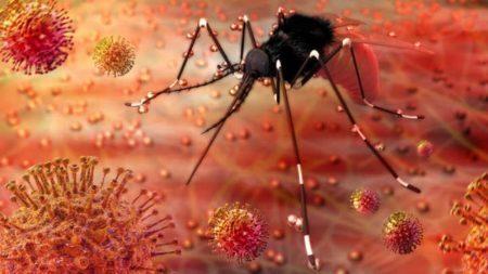 ilustração do mosquito da zika