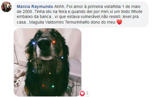 cachorro com luzes de natal