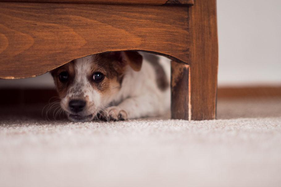 filhote de cachorro escondido embaixo da cama