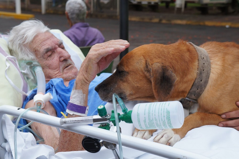 Senior man cries for missing dog in hospital and receives surprise