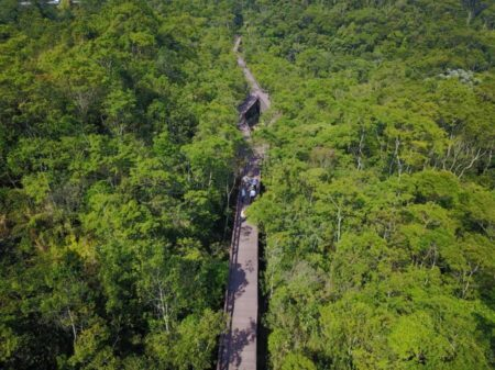 trilha suspensa do parque ecológico imigrantesvista de cima