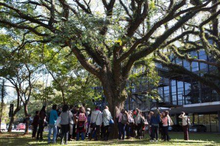 pessoas observam grande árvore em passeio no parque ibirapuera