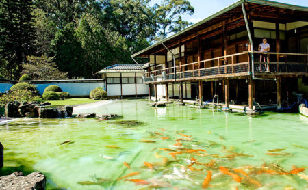 lago com carpas do pavilhão japonês do parque ibirapuera