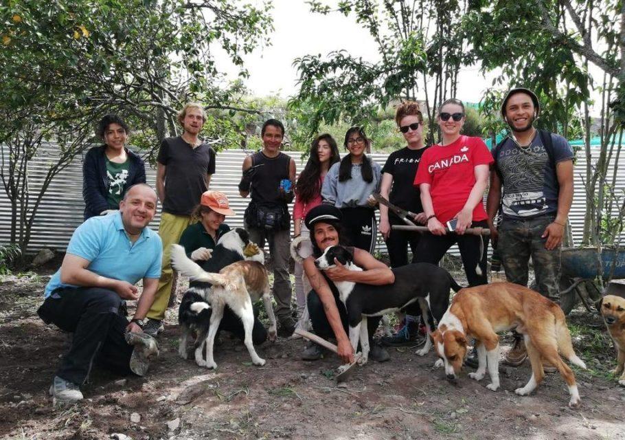 voluntários no centro de resgate de cachorros