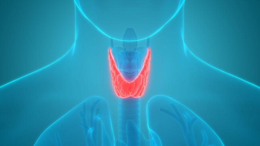 ilustração da glândula da tireoide
