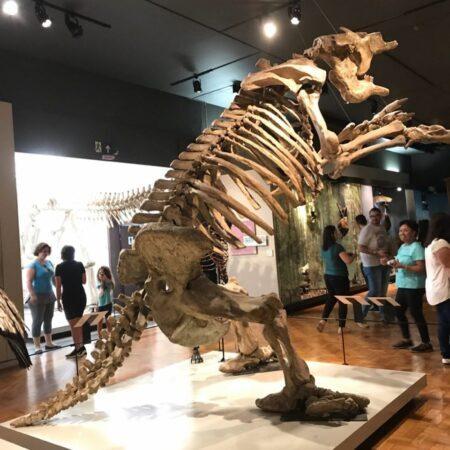 Fóssil de dinossauro do Museu do Zoologia