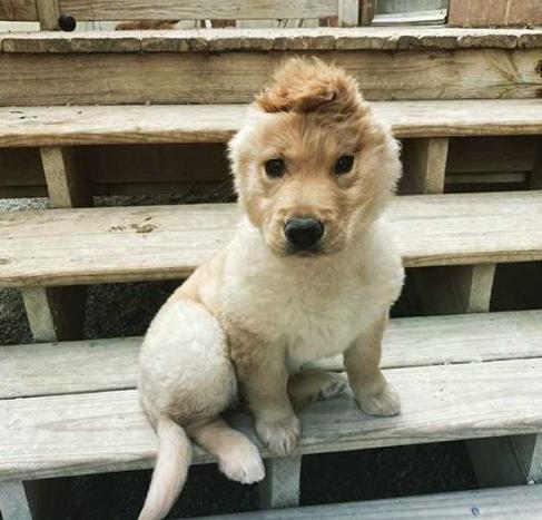 cachorrinha de uma orelha só
