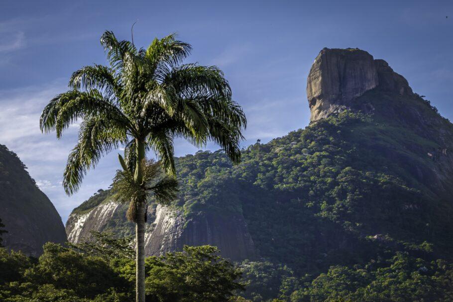 Floresta da Tijuca e Pedra da Gávea