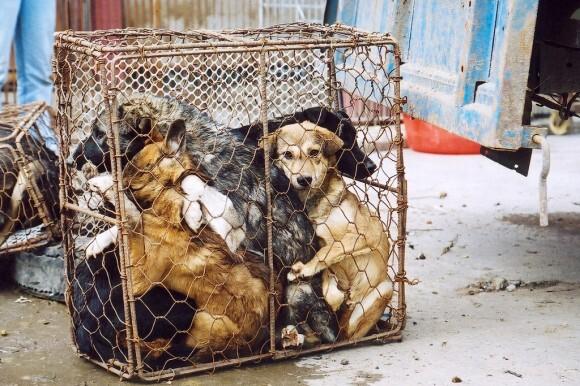 cachorros presos em jaula