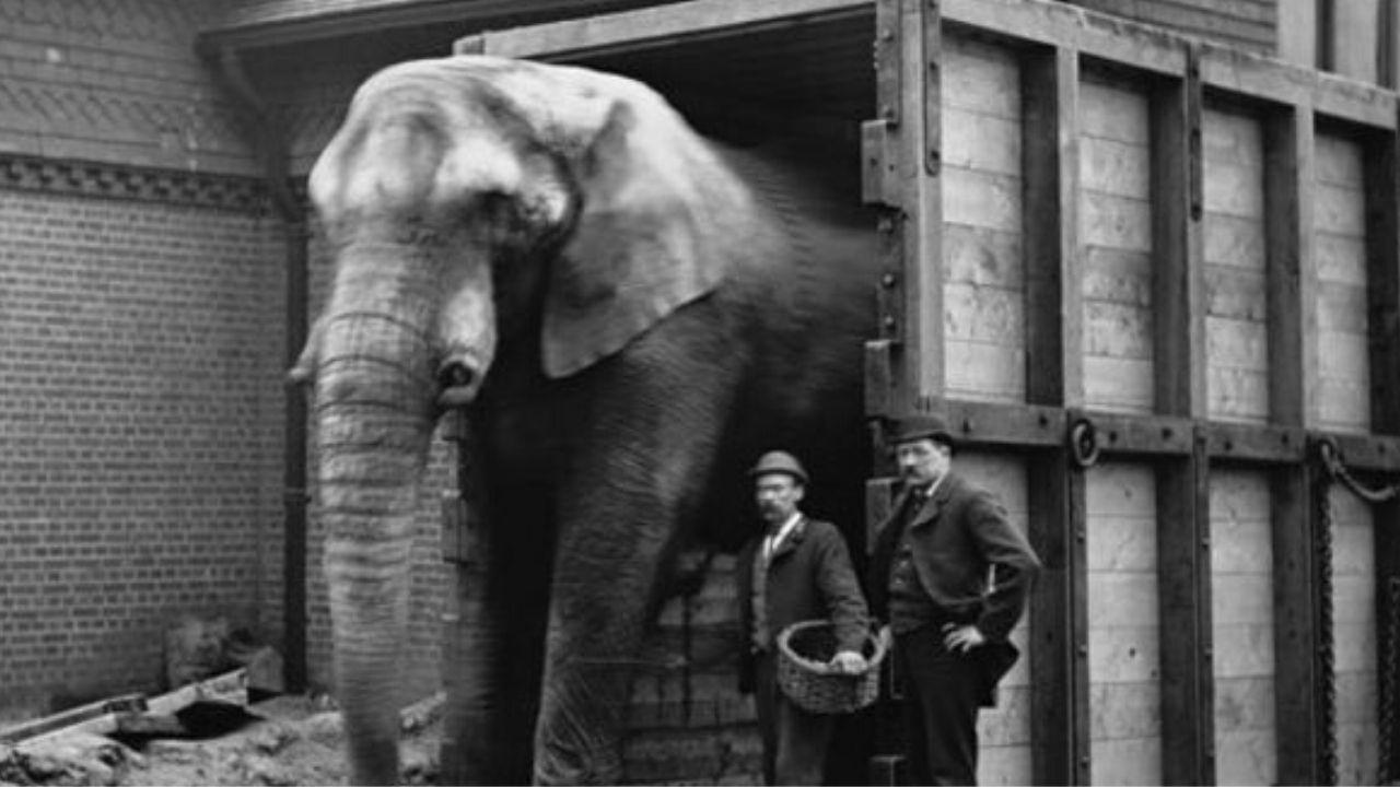 elefante Jumbo