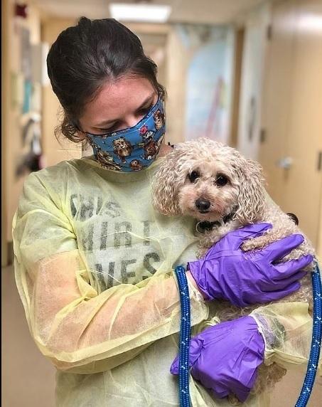 médica com cachorro