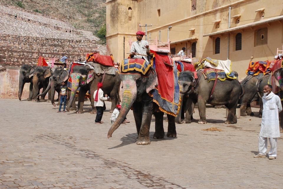 elefantes da Tailândia