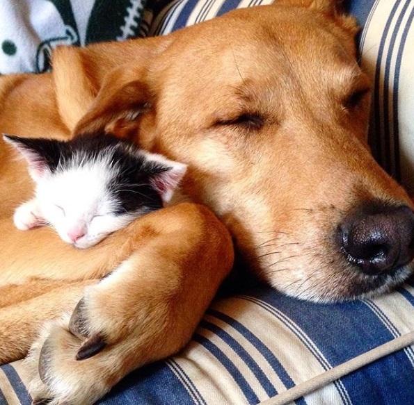 cão cuida de gato